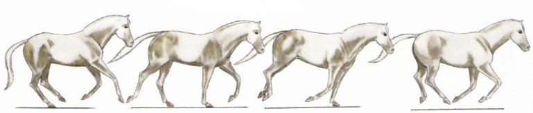 Les particularit s des chevaux - Comment dessiner un cheval au galop ...