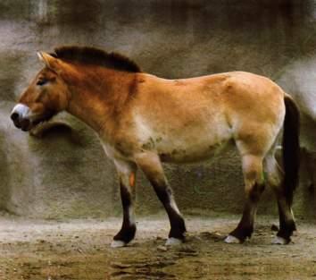 image cheval prehistorique